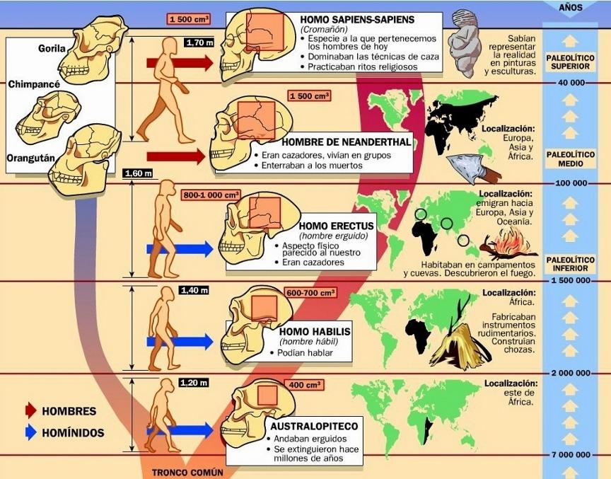 Evolución del ser humano. (1024x770) (900x677)