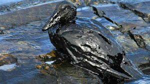 Causa-de-las-mareas-negras
